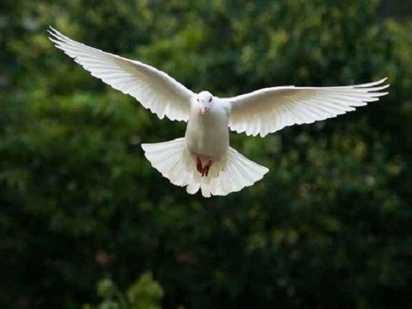 被放鸽子的心情说说 被别人放鸽子失约的简短心情句子