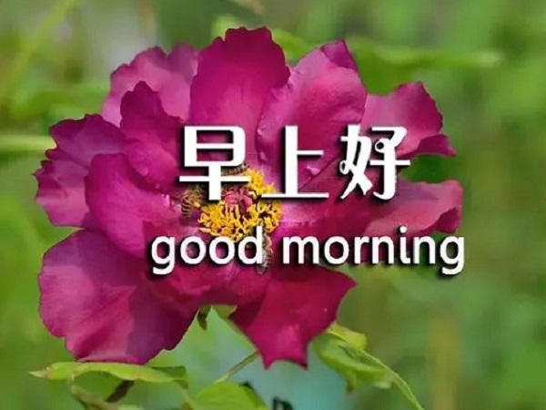 早上能打动人心的问候语 朋友圈早上问好的心情说说