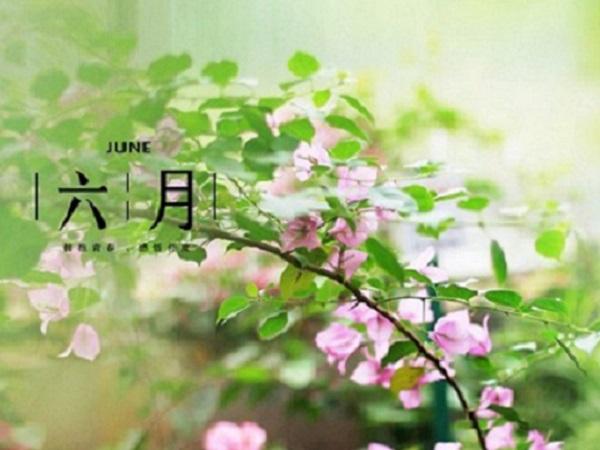 微信朋友圈迎接六月的说说 你好六月,五月再见