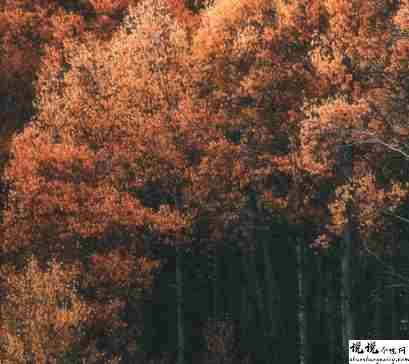秋季降温的文案带图片 秋季降温问候语的文案10