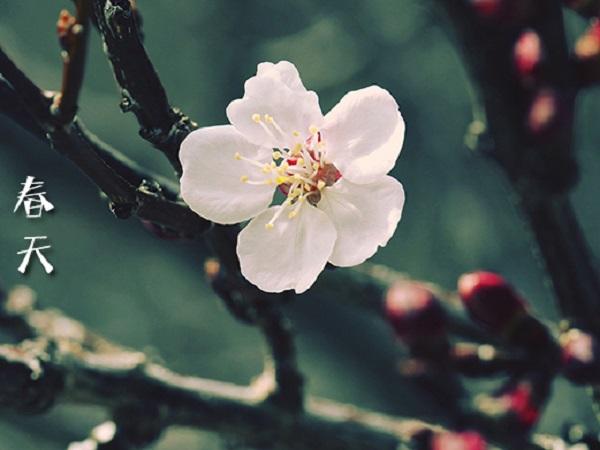 描写春天的诗句 摘抄经典古诗,体会春天到来的美丽景色