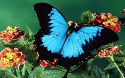 朋友圈说说蝴蝶图片大全 超好看的蝴蝶美图