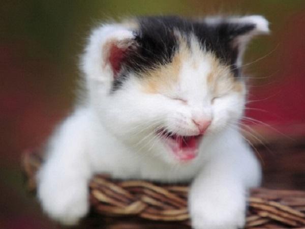 安慰女朋友的搞笑段子 逗女朋友开心的搞笑笑话