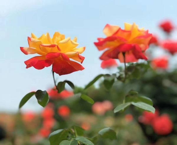 春天赏花的图片说说 赏花的美丽心情说说配图片
