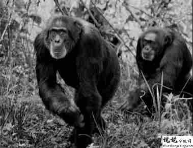 最近很火的18000年前猿人的搞笑文案带图片 让人意想不到的沙雕句子5