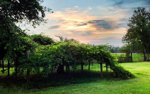 感受大自然的说说简短句子 描述美好大自然景色迷人的句子1