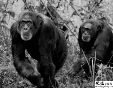 最近很火的18000年前猿人的搞笑文案带图片 让人意想不到的沙雕句子13