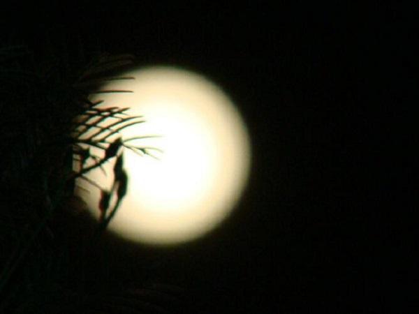 2020年八月十五赏月的唯美句子 中秋节赏月的心情句子