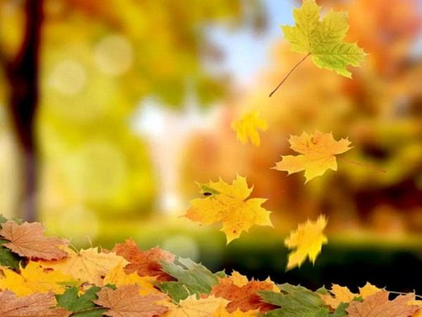 2020描写秋天来了的经典句子 述说秋天的简短诗句