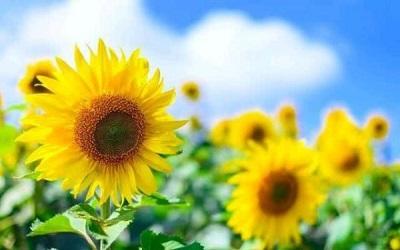 治愈系经典语录,温情暖心,阳光励志,值得阅读和分享