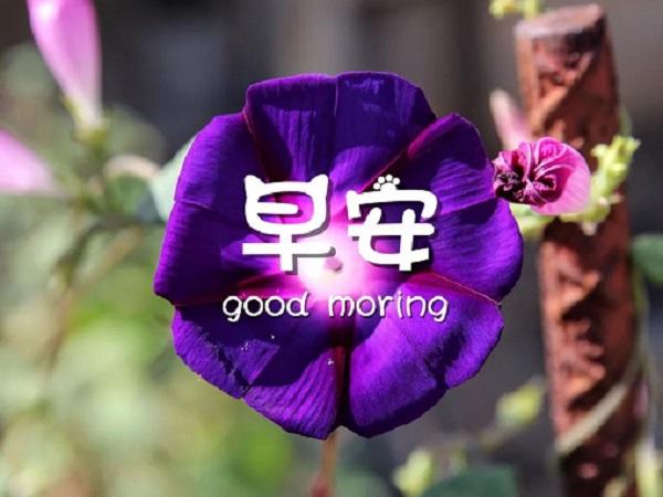 微信朋友圈唯美的早安心语配图 新一天早上说的励志句子