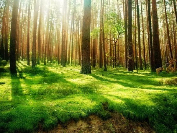感受大自然的说说简短句子 描述美好大自然景色迷人的句子