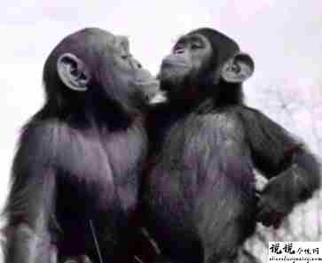 最近很火的18000年前猿人的搞笑文案带图片 让人意想不到的沙雕句子12