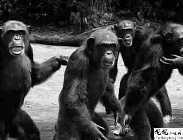 最近很火的18000年前猿人的搞笑文案带图片 让人意想不到的沙雕句子14