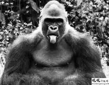 最近很火的18000年前猿人的搞笑文案带图片 让人意想不到的沙雕句子15