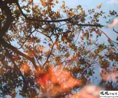 秋季唯美好听的早安问候语 秋季发朋友圈的早安句子