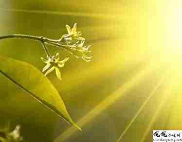 阳光明媚的心情说说配图 阳光好心情好的句子